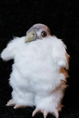 baby King Vulture Chick Doll