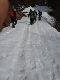 Following-Wolf-Tracks