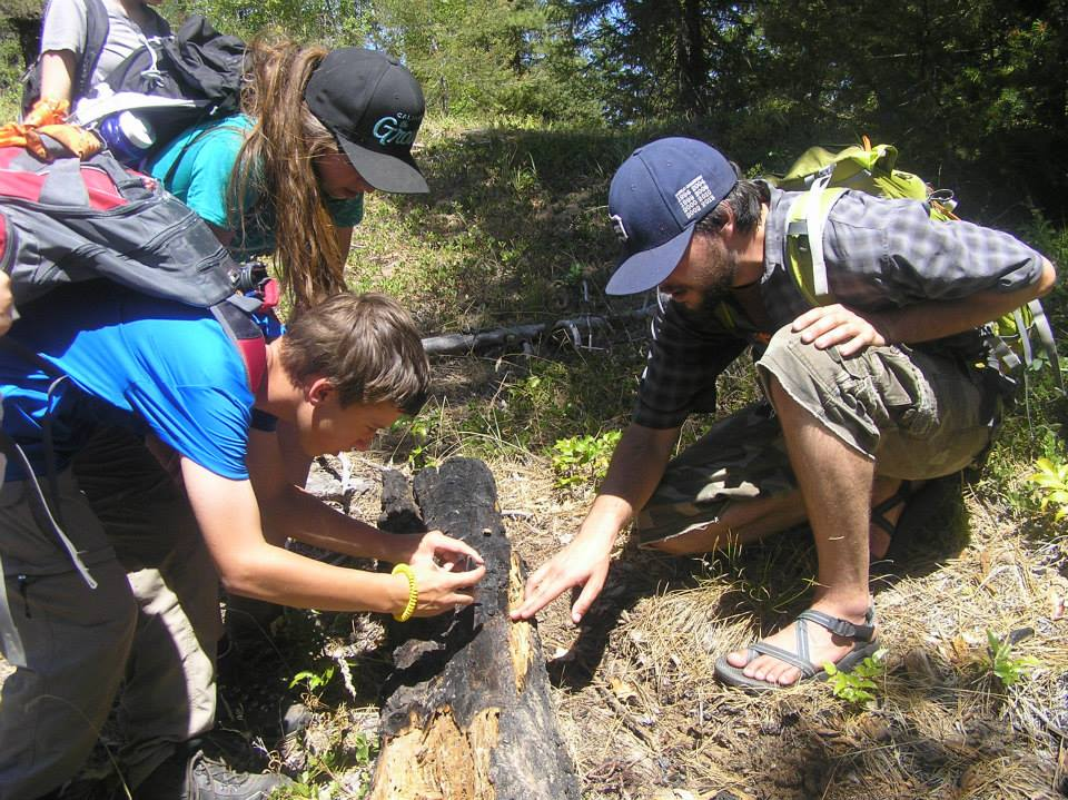 Looking at Bear Claw Marks on an Overturned Log
