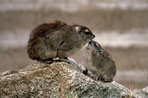 Myths about the Animal Kingdom