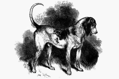 Southern Hound - Extinct Breeds of Dogs