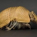 10 Mammals With Unusual Defences