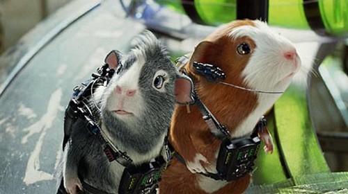 Astronot hewan babi Guinea