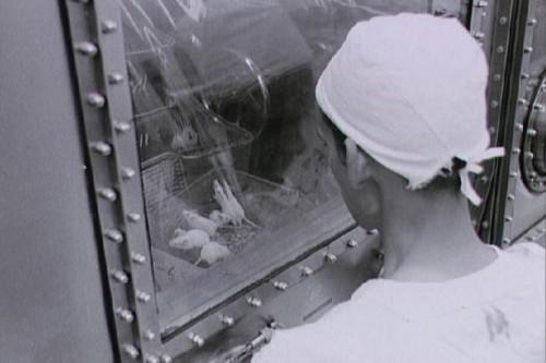 Top 10 Astronot Hewan