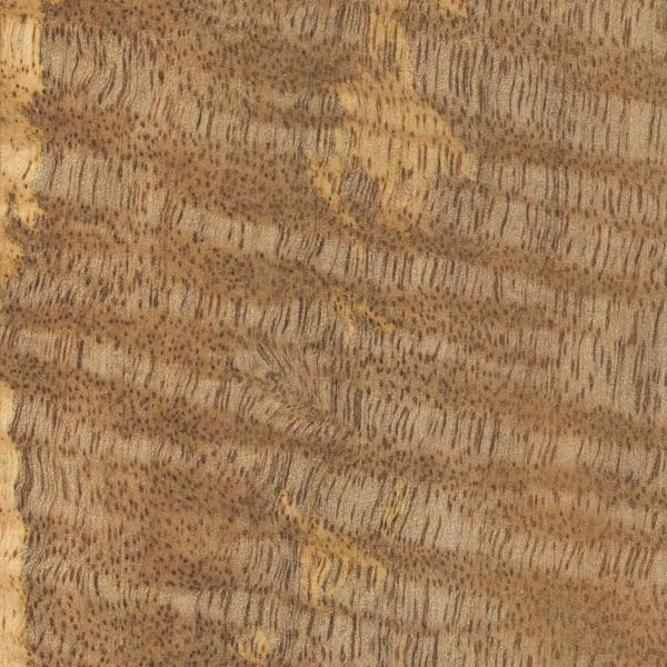 Mango The Wood Database - Lumber Identification (Hardwood)