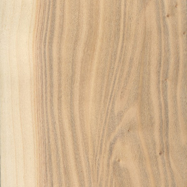 Poplar vs Pine - Which One Is Suit For Your Project? (COMPARISON