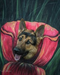 2nd Place Runner-Up, Pets: Gina Pemberton