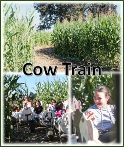 cow train