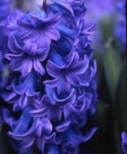 delft_blue