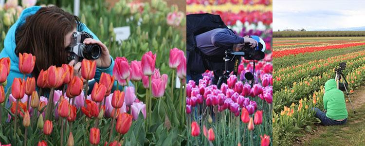tulip-fest-gallery9