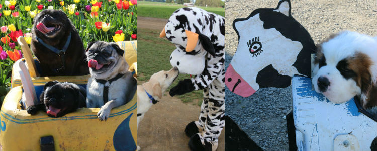 tulip-fest_dogs-welcome