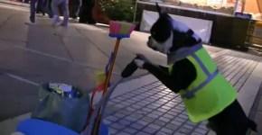 Con este Boston Terrier no hay basura que quede en el piso