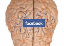 Facebook cerebro