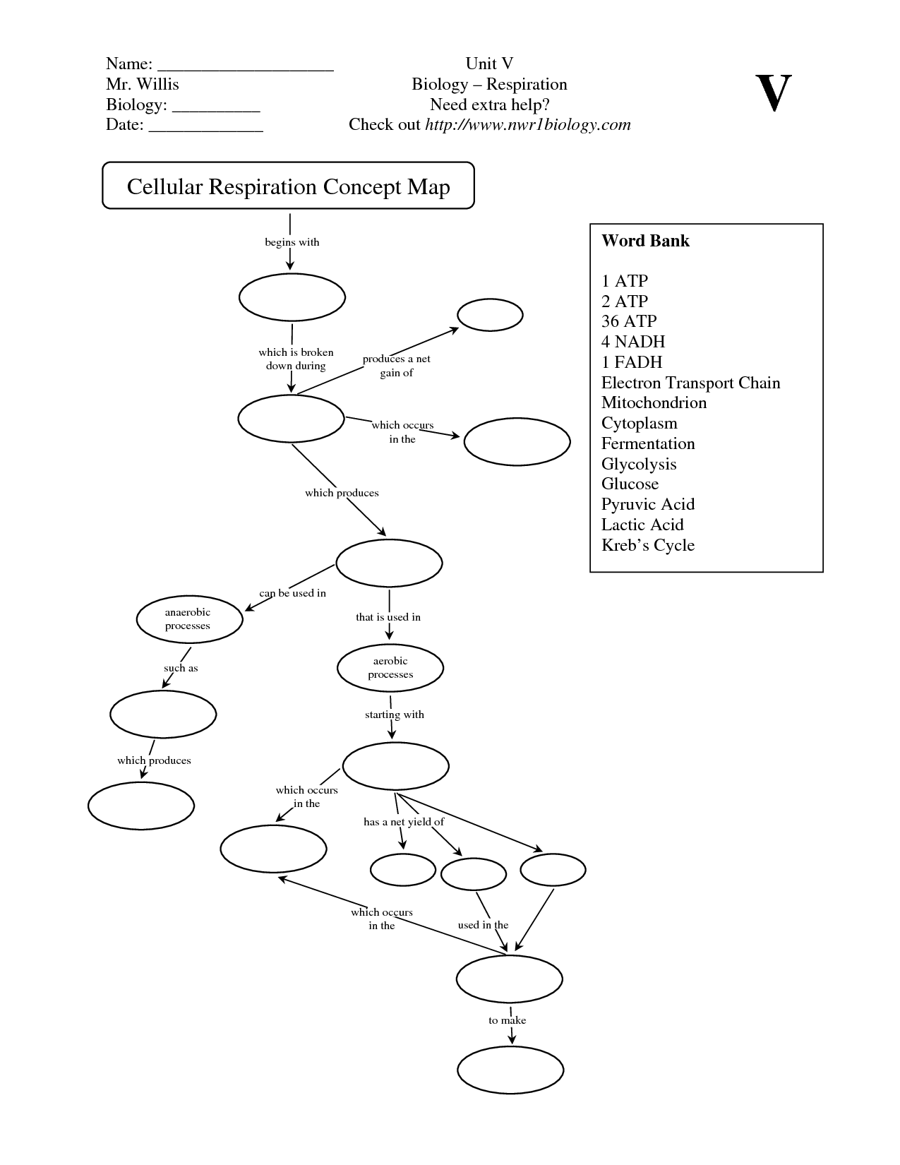Cellular respiration diagram worksheet answers