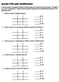 16 Best Images of Blood Type Worksheet - Answer Key ...