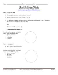 15 Best Images of Mitosis And Meiosis Worksheet High ...