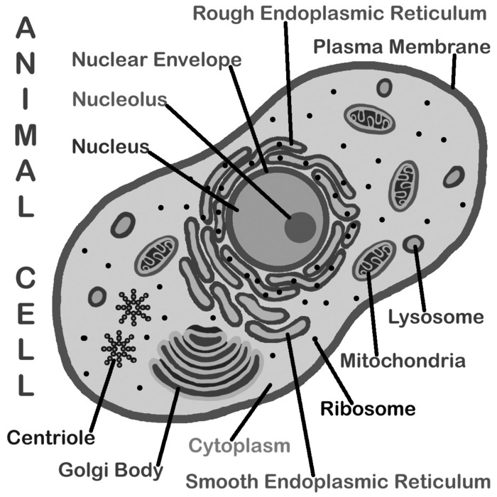 additionally Cell Organelles Worksheet Answer Key   Sanfranciscolife in addition Best Of Animal and Plant Cells Worksheet   WRITING WORKSHEET further 20 Awesome Google Sheets  Spreadsheet  Tips   Tricks additionally Biology4Kids    Cell Structure furthermore  moreover Looking Inside Cells Worksheet besides Cell Cycle Worksheet Answer Key   Oaklandeffect furthermore √ 10 Best Images of Looking Inside Cells Worksheet Answers additionally  furthermore Beautiful Cells and organelles Worksheet Answers Pics together with animal cell organelles functions chart – atlaselevator co together with 21 Inspirational Stress Portrait Of A Killer Worksheet   Credit Card as well 28 Unique Amoeba Sisters Dna Vs Rna and Protein Synthesis Worksheet furthermore Worksheet   animal cell coloring worksheet answers Animal And Plant in addition Famous Quotations Math Worksheet Answers Fresh Special Needs Quotes. on looking inside cells worksheet answers