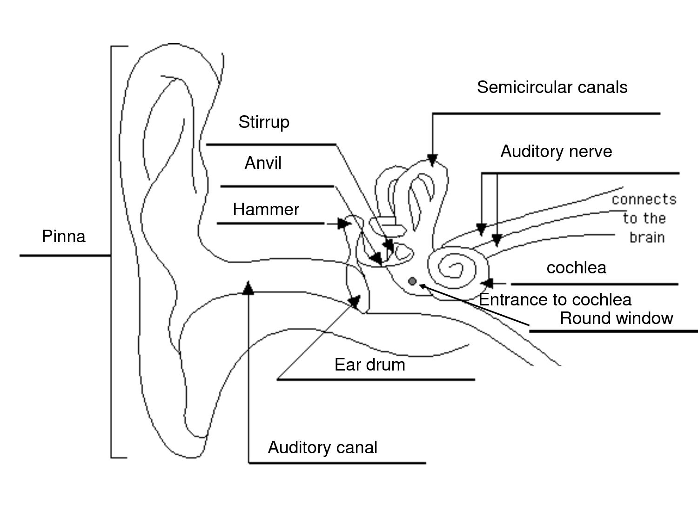simple ear diagram