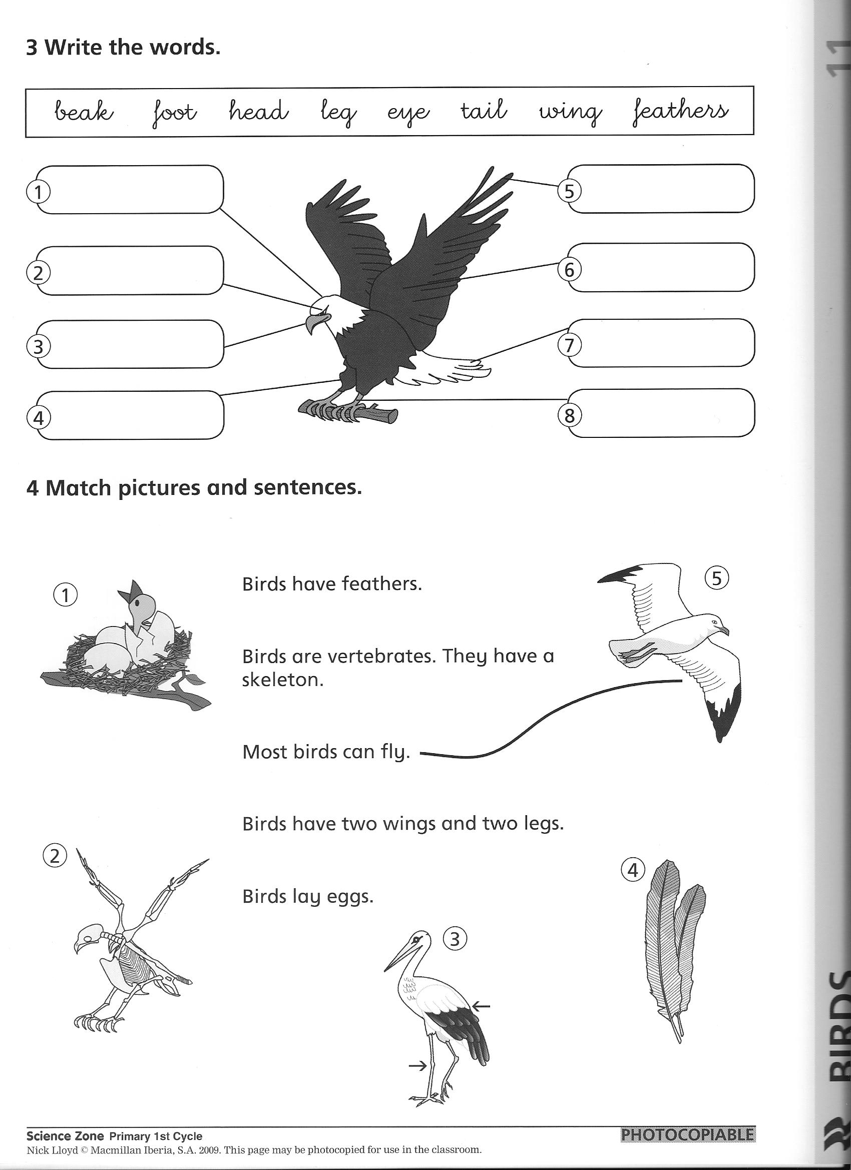 14 Best Images of Elementary Animal Classification