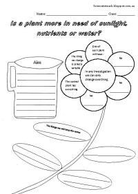 18 Best Images of First Grade Science Plant Worksheet ...