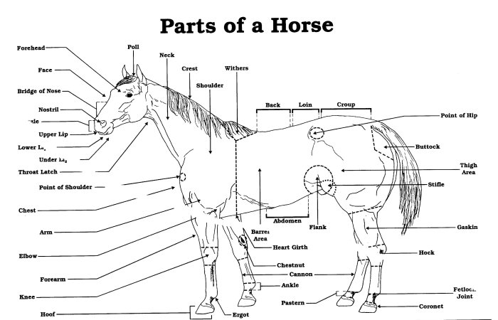 western saddle diagram wiring diagrams pictures