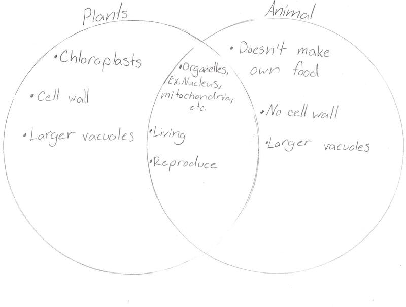 plant cell structure youtube
