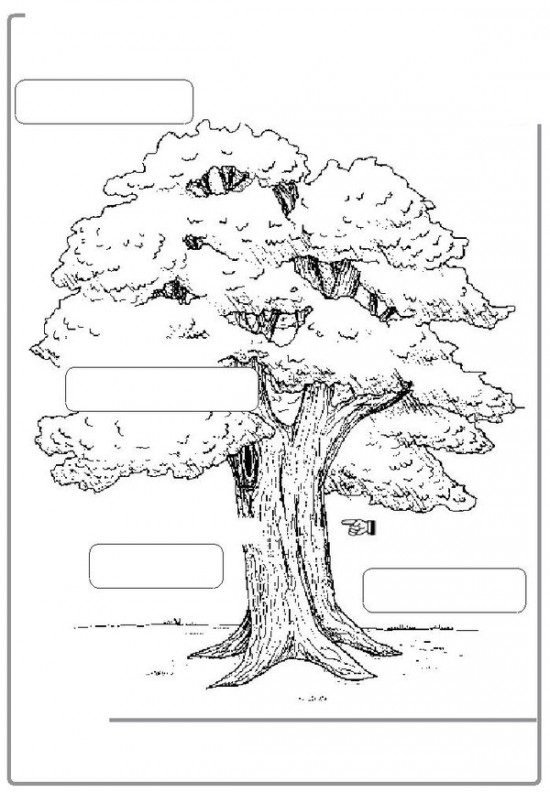 13 Best Images Of Part Of Tree Worksheet Printable Label