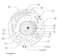 13 Best Images of Parts Of A Plant Cell Worksheet - Plant ...