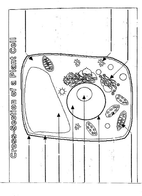diagram of cell parts