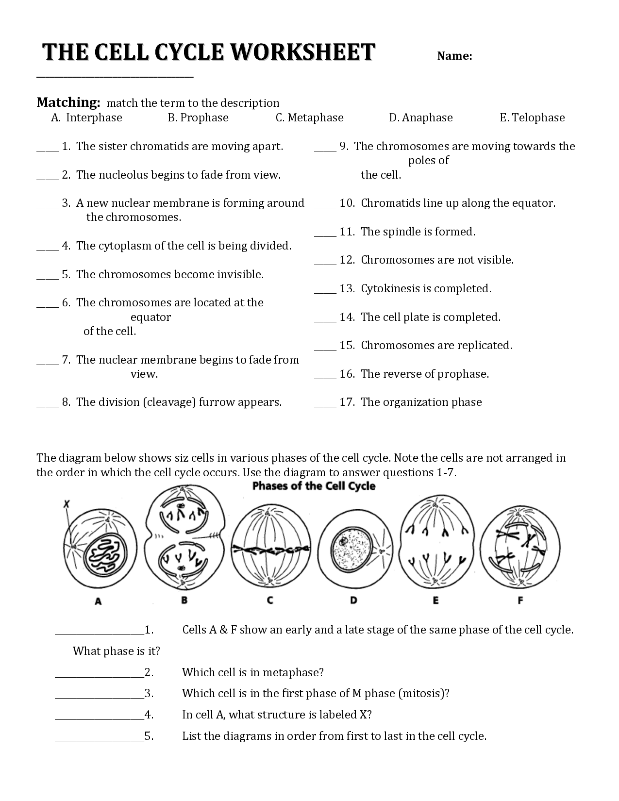 18 best images of cell cycle review worksheet answers