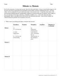 15 Best Images of Mitosis Vs Meiosis Worksheet Answers ...