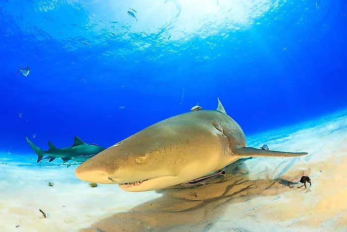 What Animals Live In The Atlantic Ocean Worldatlascom