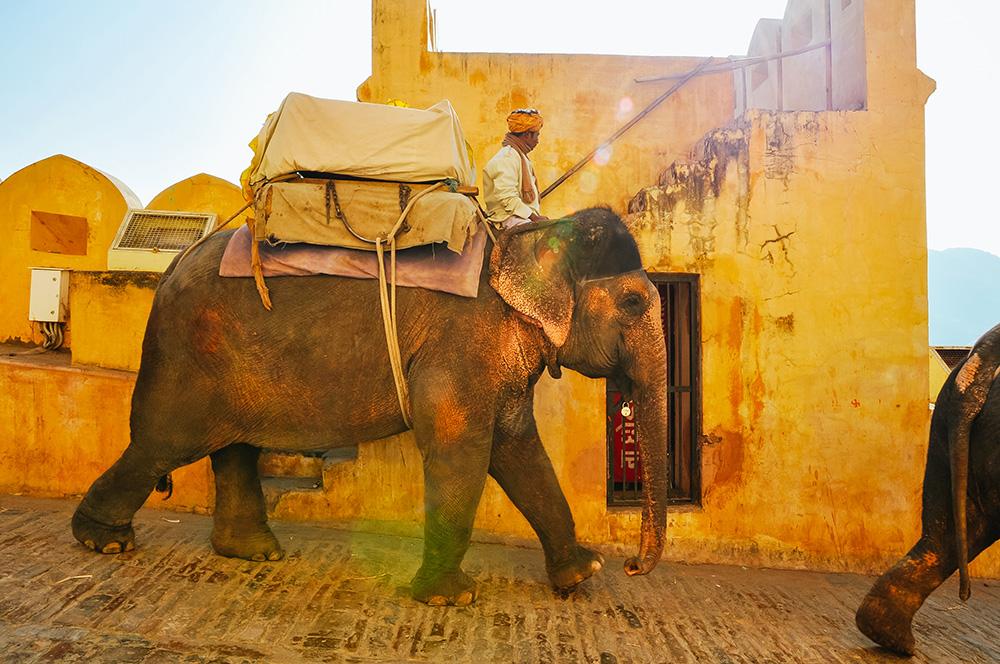 elephant-rajasthan