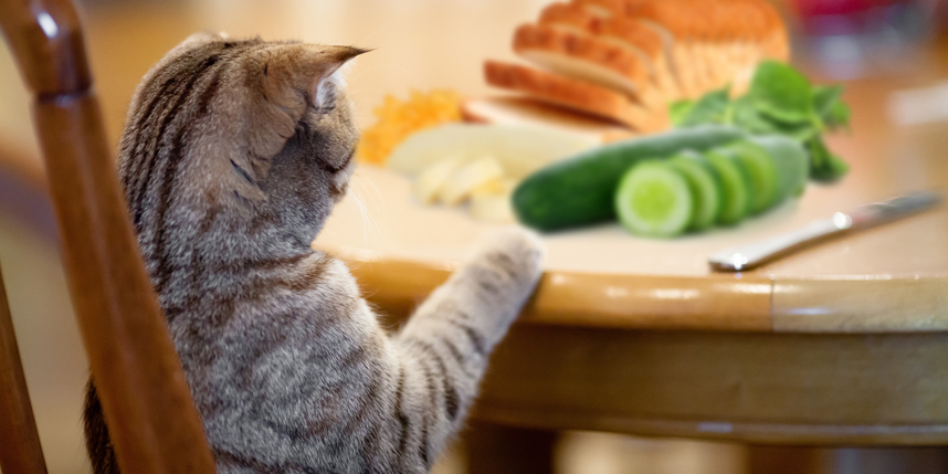 Human Food for Cats What Can Cats Eat? World\u0027s Best Cat Litter