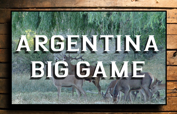 ARGENTINA BIG GAME BUTTON