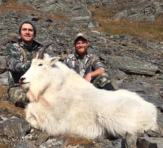 mountain goat, goat hunting, mountain goat hunt, mountain goat hunting, alaska mountain goat