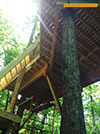 201606-World-Treehouses-Brevard-2