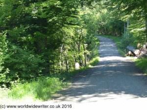 Woodland on the Uetliberg