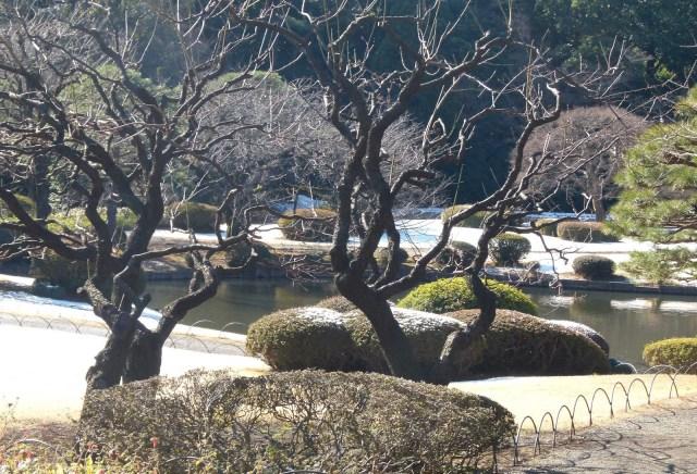 Japanese Formal Garden, Shinjuku, Tokyo - www.worldwidewriter.co.uk