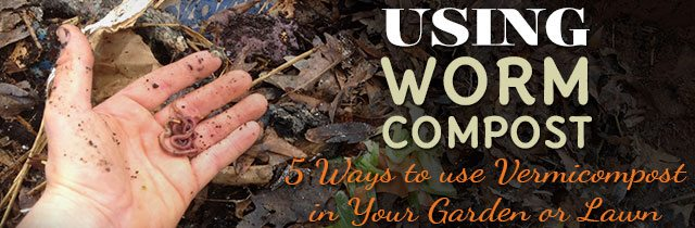 Using Worm Compost Using Worm Compost