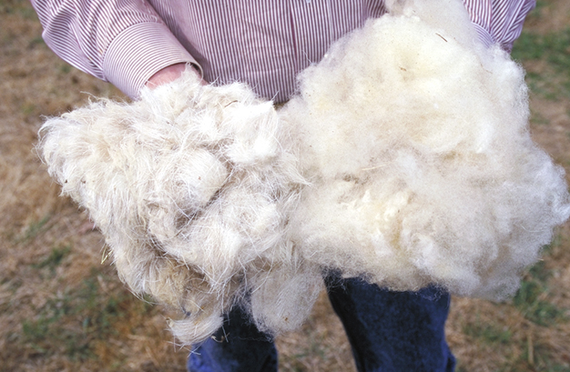 'The wool production in Spain has suffered a loss of about 30% in recent years. Its market price has dropped so much that the costs are higher than shearing the income generated, so many farmers choose to eliminate it by burning it or giving it away' - photo found here