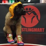 Puppy in Wrestling Gear