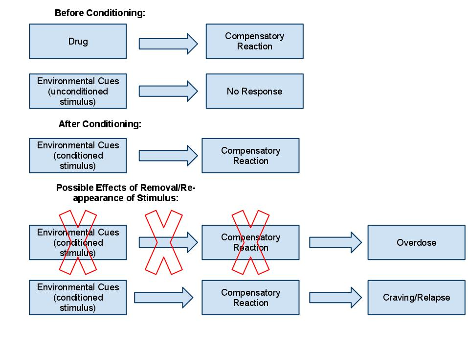 Abstract This study attempted to replicate the work of Ivan - WriteWork - examples of classical conditioning
