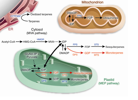 The role of secondary metabolites in the interaction of plants and
