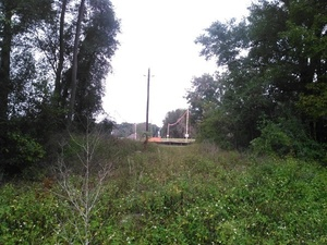 w. to Sabal Trail, less than 200 feet from sinkhole, 30.3721680, -83.1550210