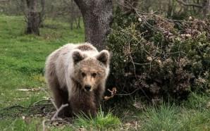 iSquare Αρκούδος Πάτρικ