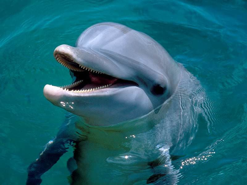 Cute Baby Dolphin Wallpaper Swim With Dolphins Primax Riviera Maya
