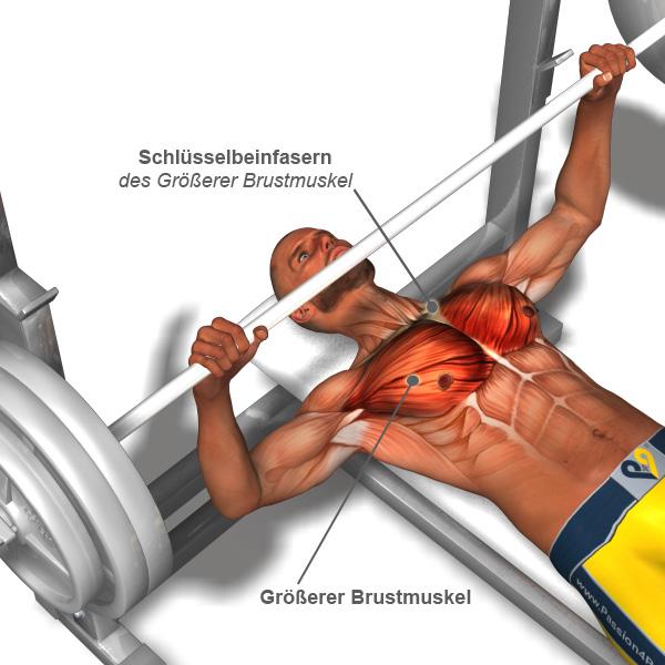 brustübungen + brust training