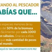 Los sábalos son los peces más abundantes de la cuenca parano-platense.