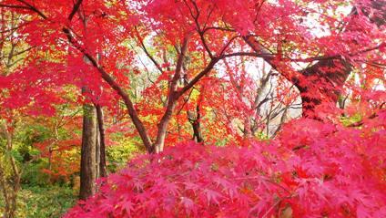 一碧湖の紅葉3